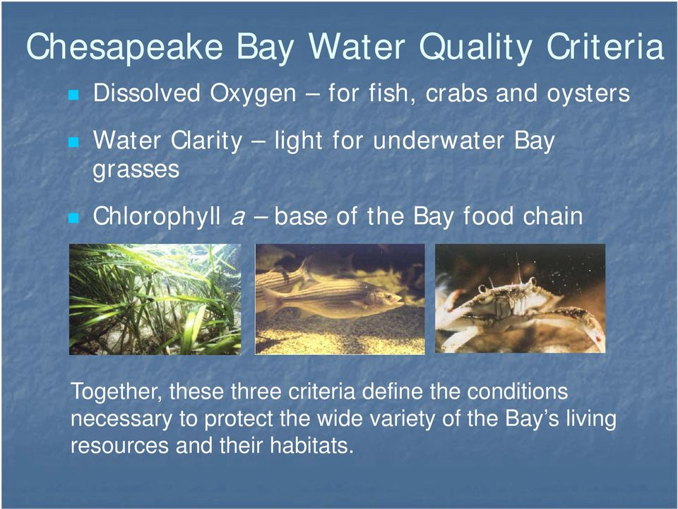 the Bay food chain Together, these three criteria define the conditions