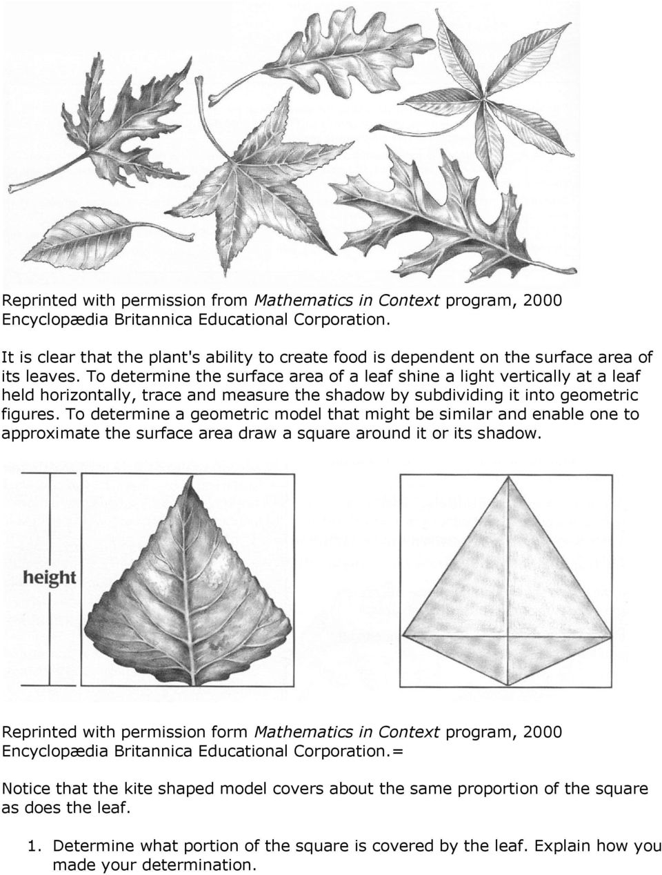 To determine the surface area of a leaf shine a light vertically at a leaf held horizontally, trace and measure the shadow by subdividing it into geometric figures.