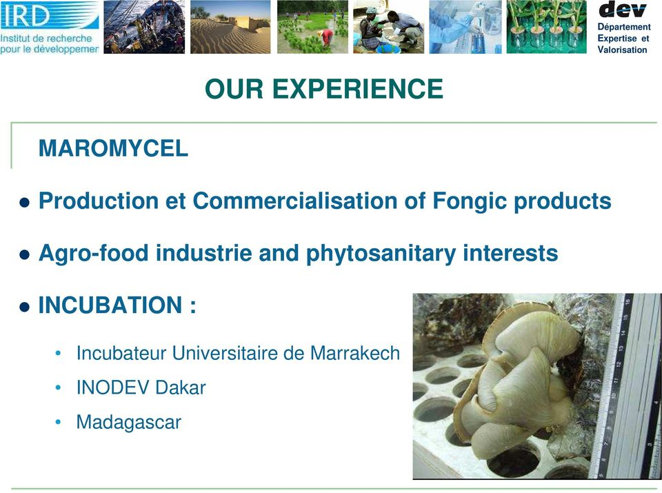 industrie and phytosanitary interests INCUBATION