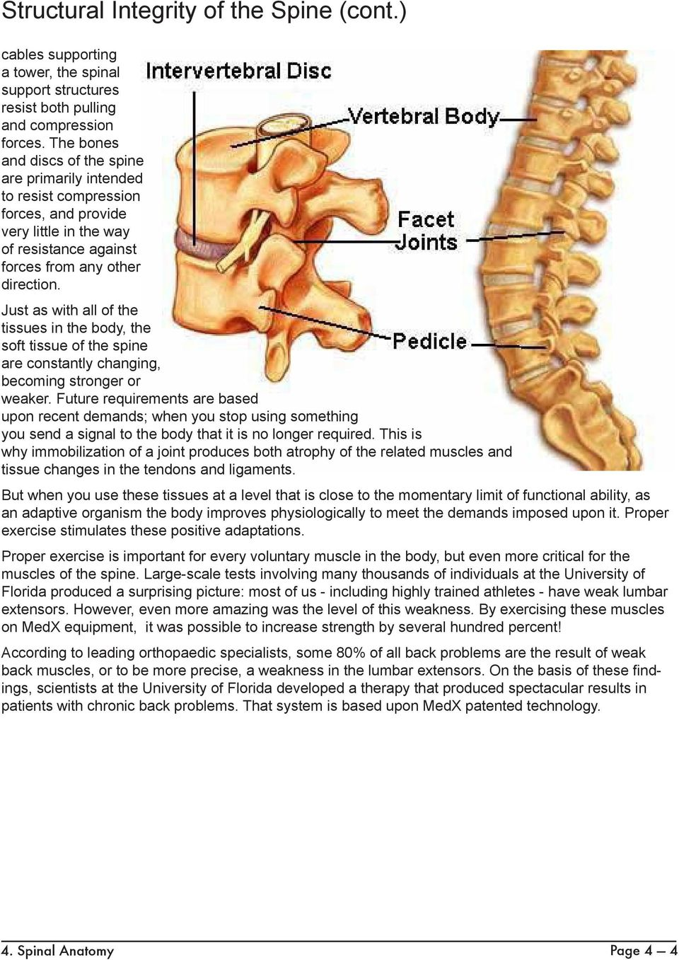 Just as with all of the tissues in the body, the soft tissue of the spine are constantly changing, becoming stronger or weaker.