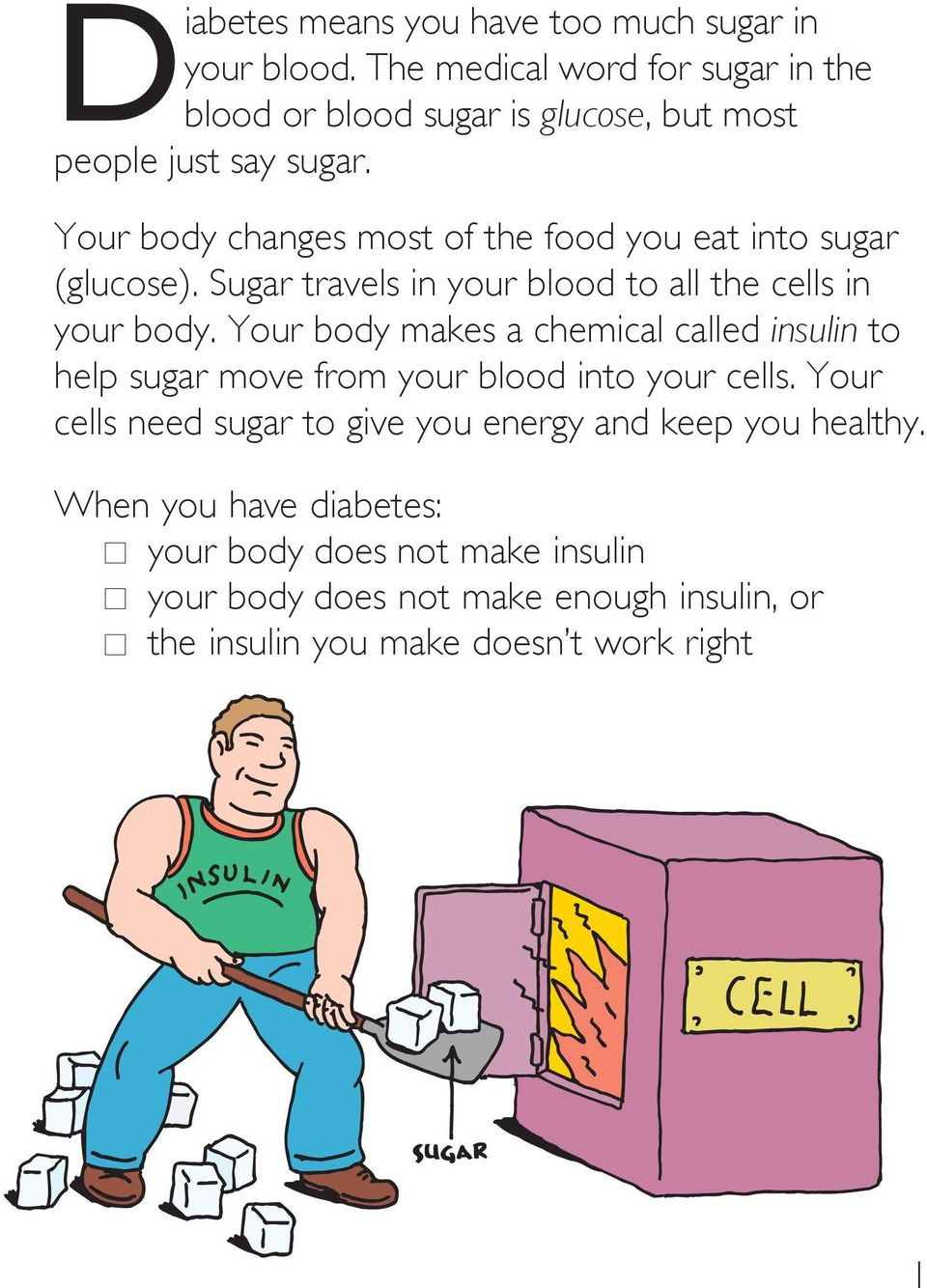 Your body changes most of the food you eat into sugar (glucose). Sugar travels in your blood to all the cells in your body.