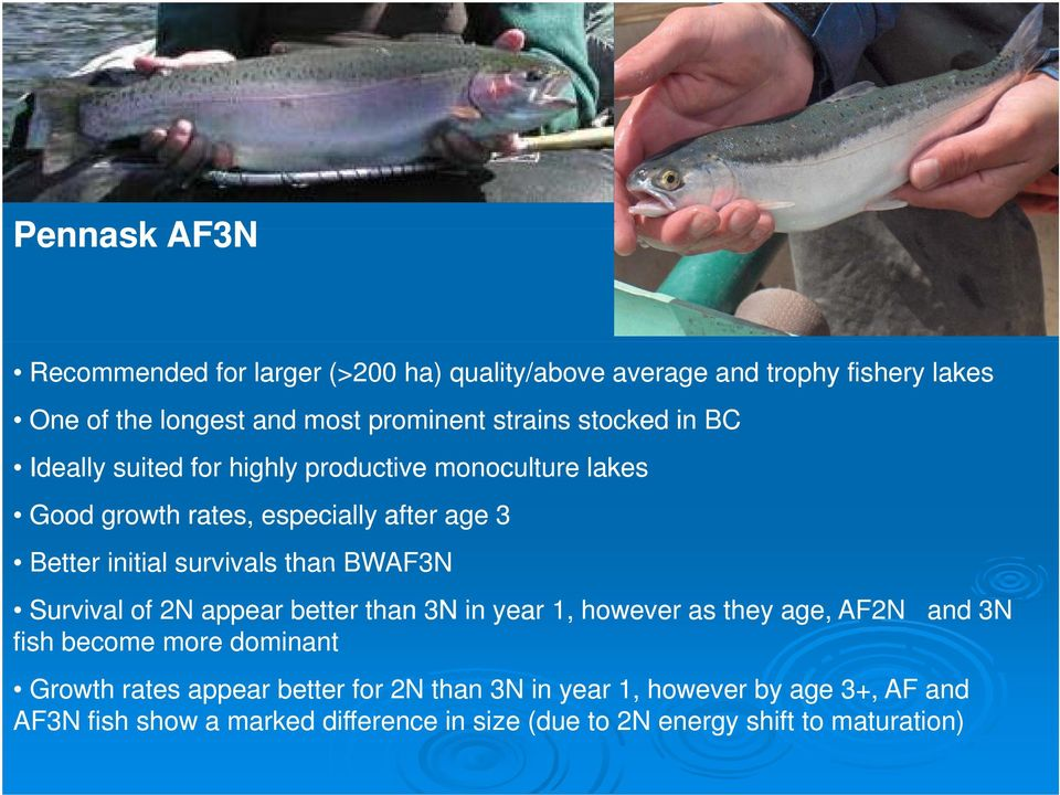 than BWAF3N Survival of 2N appear better than 3N in year 1, however as they age, AF2N and 3N fish become more dominant Growth rates appear