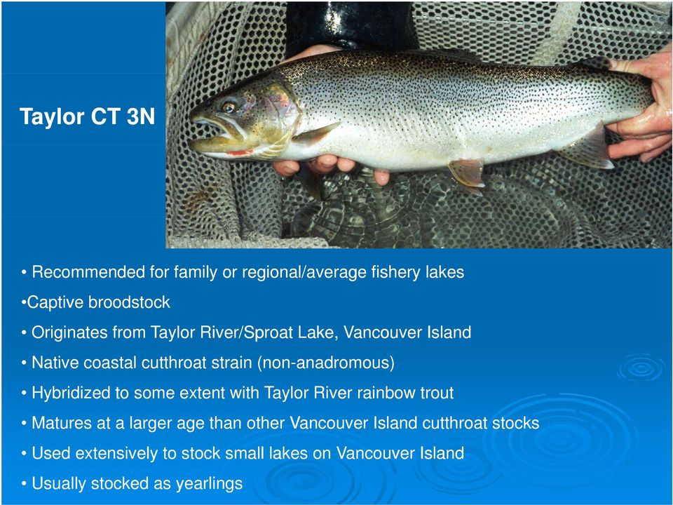 Hybridized to some extent with Taylor River rainbow trout Matures at a larger age than other Vancouver