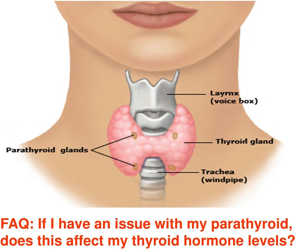 parathyroid, does