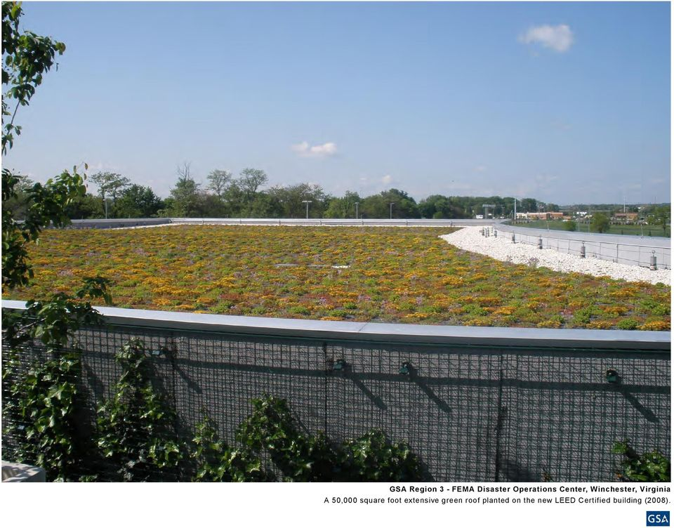 square foot extensive green roof planted