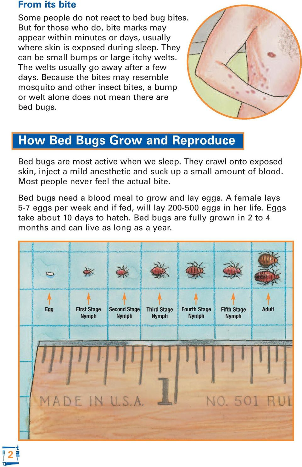 Because the bites may resemble mosquito and other insect bites, a bump or welt alone does not mean there are bed bugs. How Bed Bugs Grow and Reproduce Bed bugs are most active when we sleep.