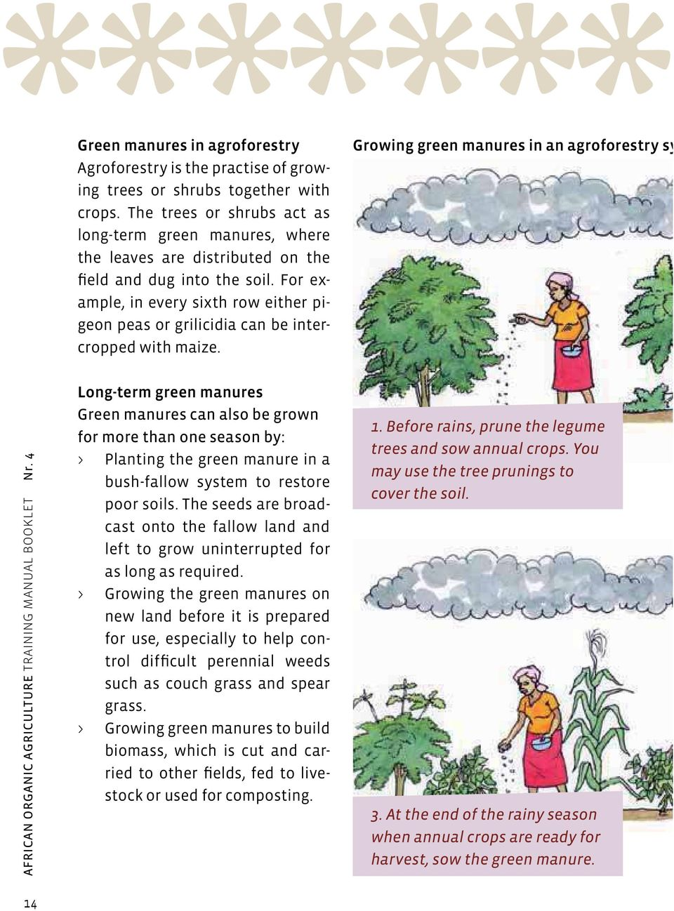For example, in every sixth row either pigeon peas or grilicidia can be intercropped with maize. Growing green manures in an agroforestry sy AFRICAN ORGANIC AGRICULTURE TRAINING MANUAL BOOKLET Nr.