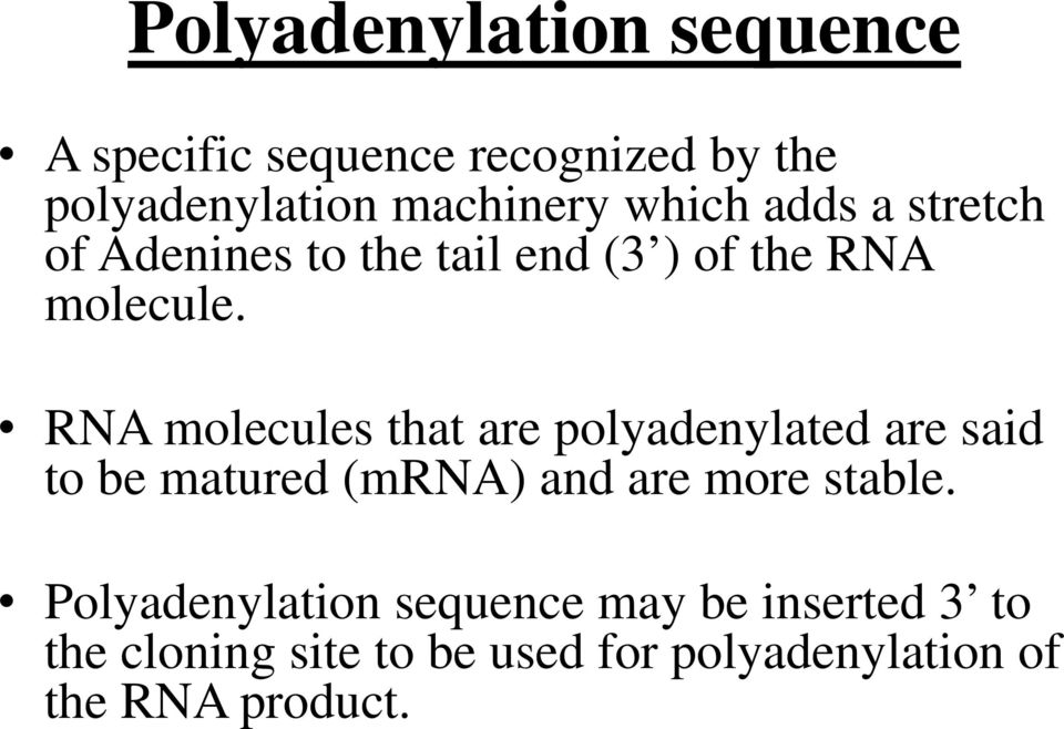 RNA molecules that are polyadenylated are said to be matured (mrna) and are more stable.
