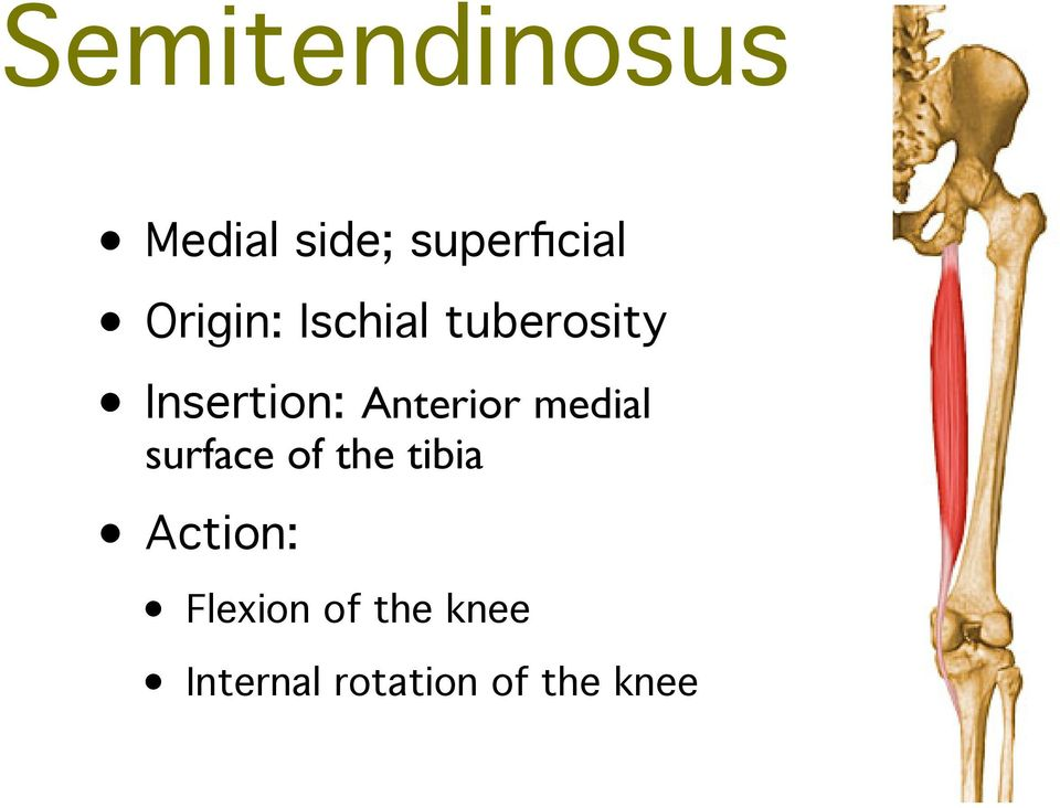 Anterior medial surface of the tibia