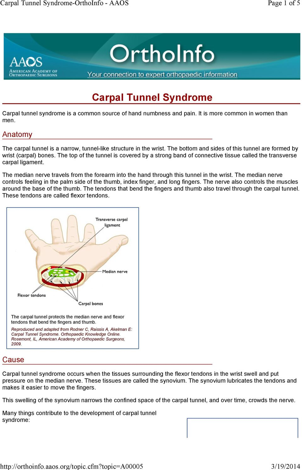 The top of the tunnel is covered by a strong band of connective tissue called the transverse carpal ligament. The median nerve travels from the forearm into the hand through this tunnel in the wrist.