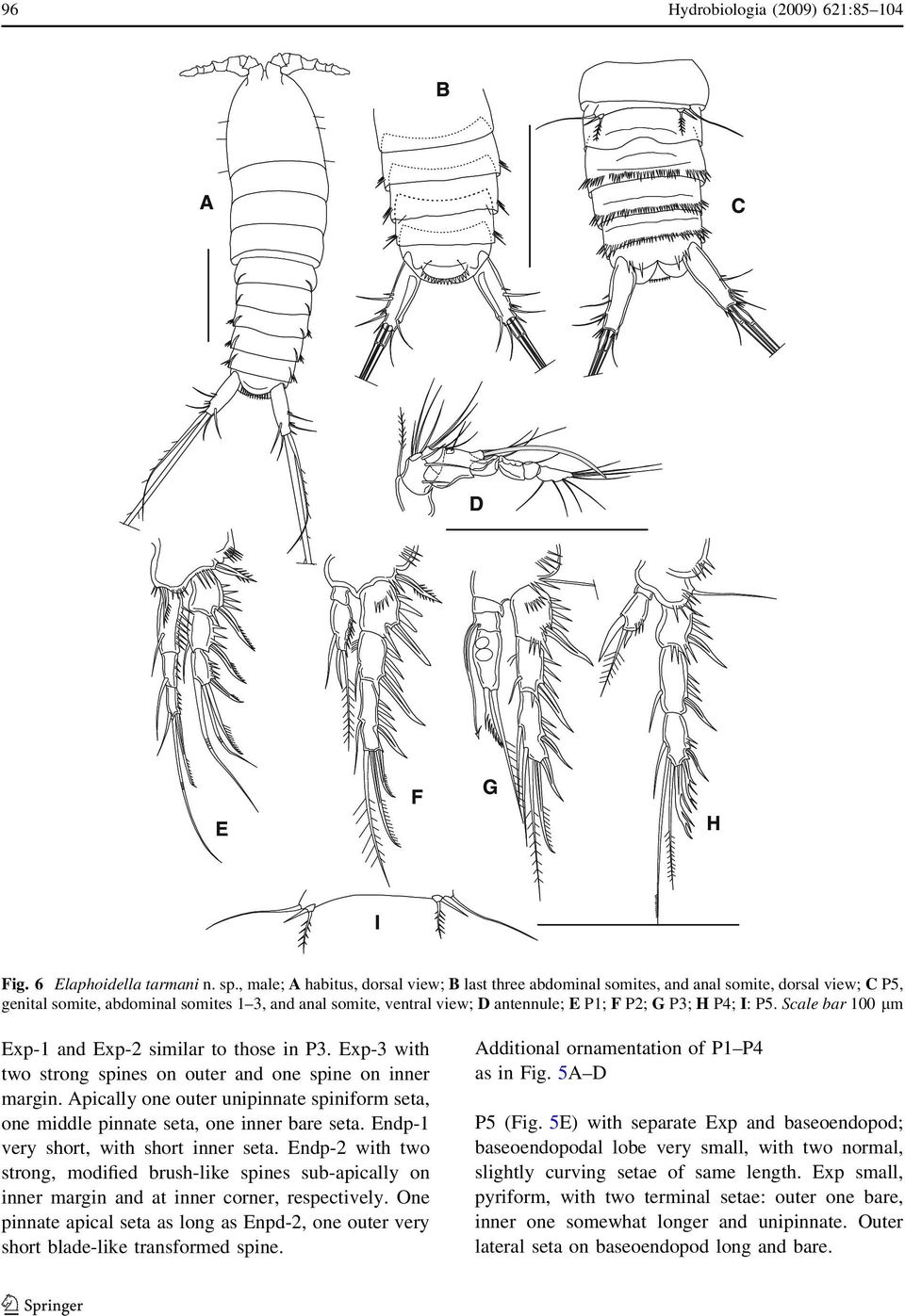 P3; H P4; I: P5. Scale bar 100 lm Exp-1 and Exp-2 similar to those in P3. Exp-3 with two strong spines on outer and one spine on inner margin.
