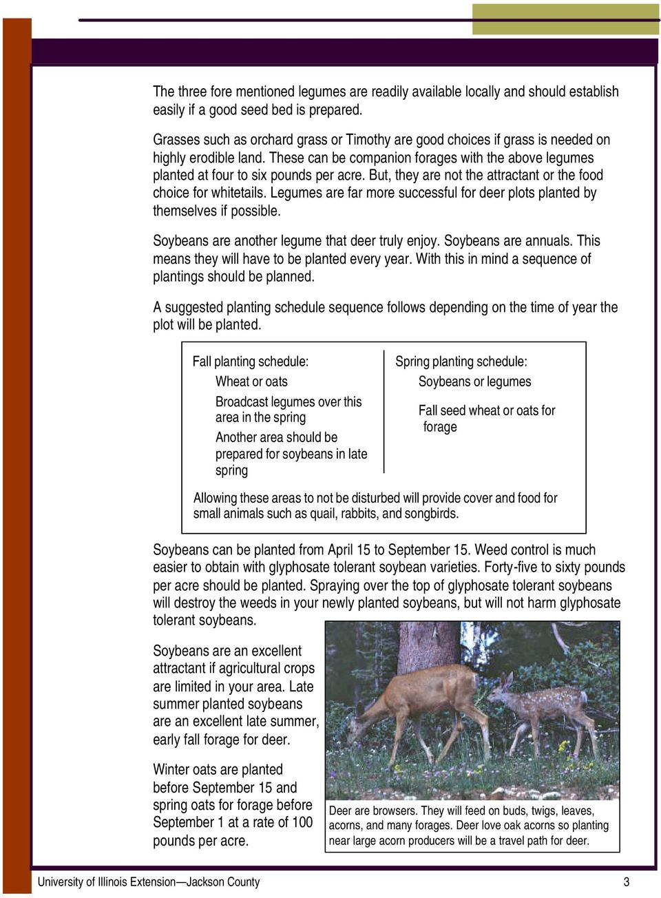 But, they are not the attractant or the food choice for whitetails. Legumes are far more successful for deer plots planted by themselves if possible. Soybeans are another legume that deer truly enjoy.