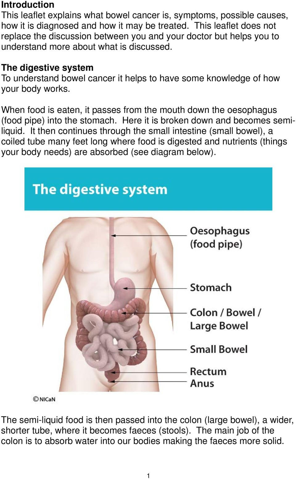 The digestive system To understand bowel cancer it helps to have some knowledge of how your body works. When food is eaten, it passes from the mouth down the oesophagus (food pipe) into the stomach.