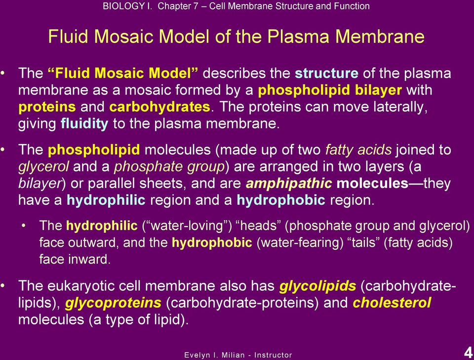 carbohydrates. The proteins can move laterally, giving fluidity to the plasma membrane.