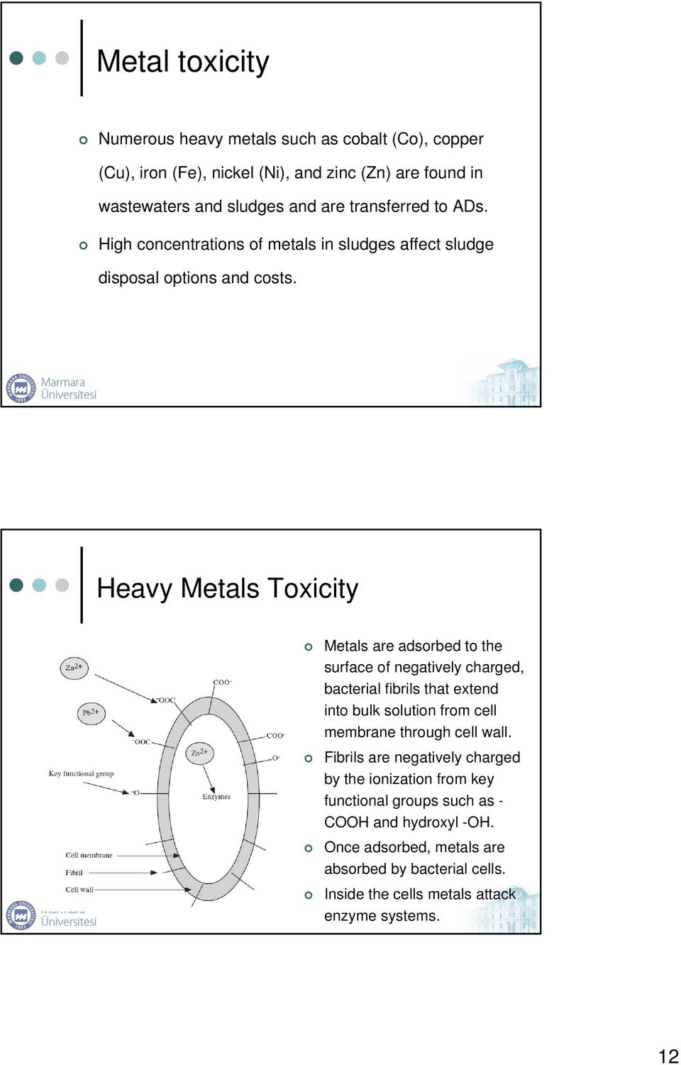 Heavy Metals Toxicity Metals are adsorbed to the surface of negatively charged, bacterial fibrils that extend into bulk solution from cell membrane through