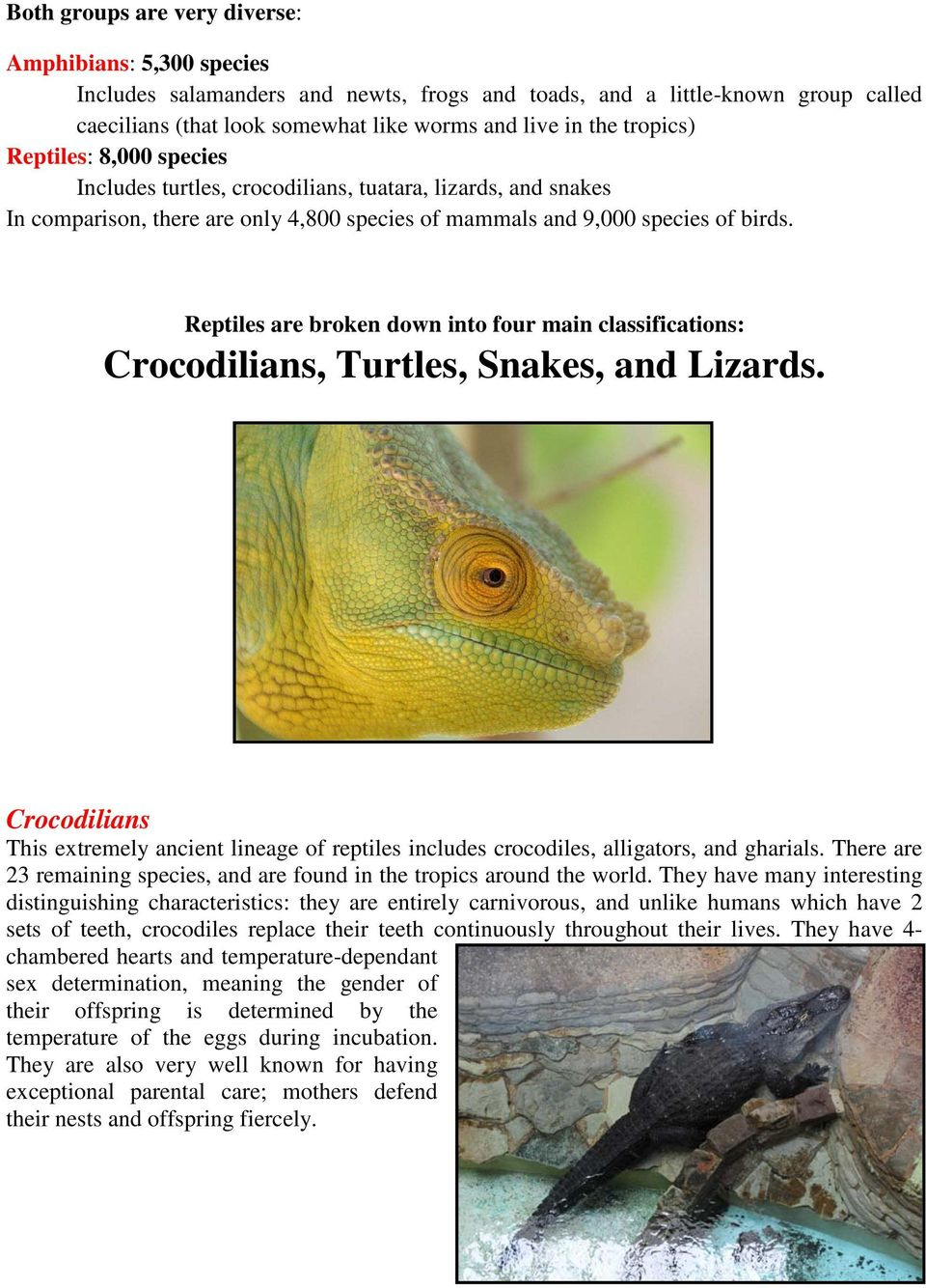 Reptiles are broken down into four main classifications: Crocodilians, Turtles, Snakes, and Lizards.