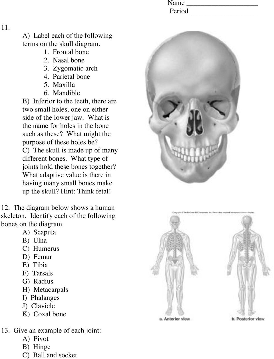 C) The skull is made up of many different bones. What type of joints hold these bones together? What adaptive value is there in having many small bones make up the skull? Hint: Think fetal! 12.