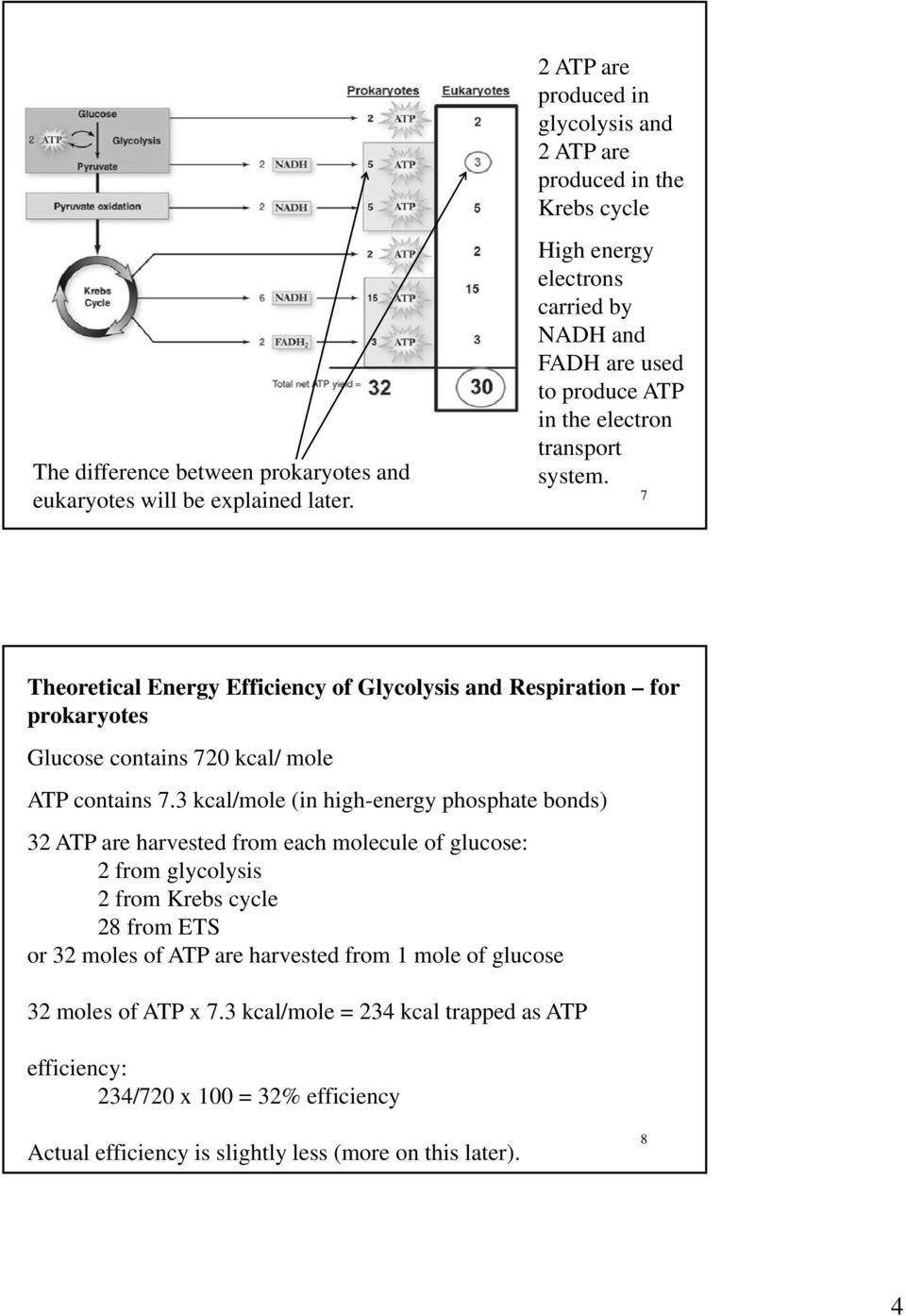 7 Theoretical Energy Efficiency of Glycolysis and Respiration for prokaryotes Glucose contains 720 kcal/ mole ATP contains 7.