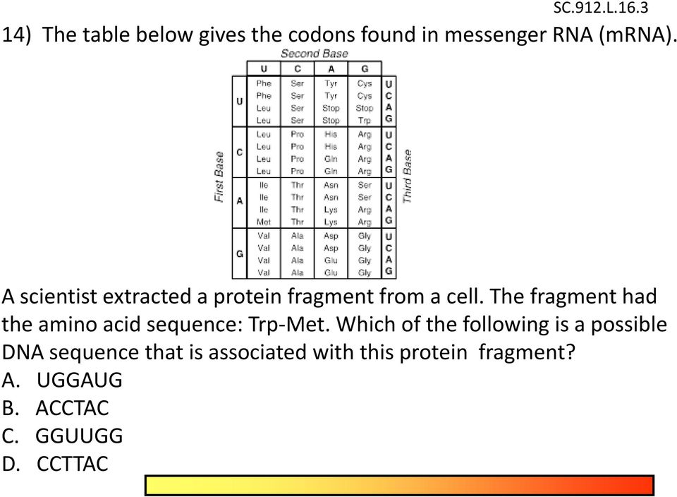 The fragment had the amino acid sequence: Trp-Met.