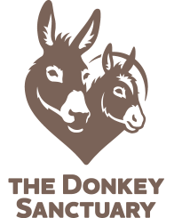 UNDERSTANDING DONKEY BEHAVIOUR FACTORS THAT INFLUENCE A DONKEY S BEHAVIOUR EVOLUTION For 60 million years horses and donkeys have been flight animals, surviving by running away from predators.