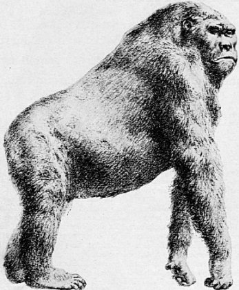 ## Read the article from a recent newspaper. King Kong with inch-wide teeth who walked alongside early man.