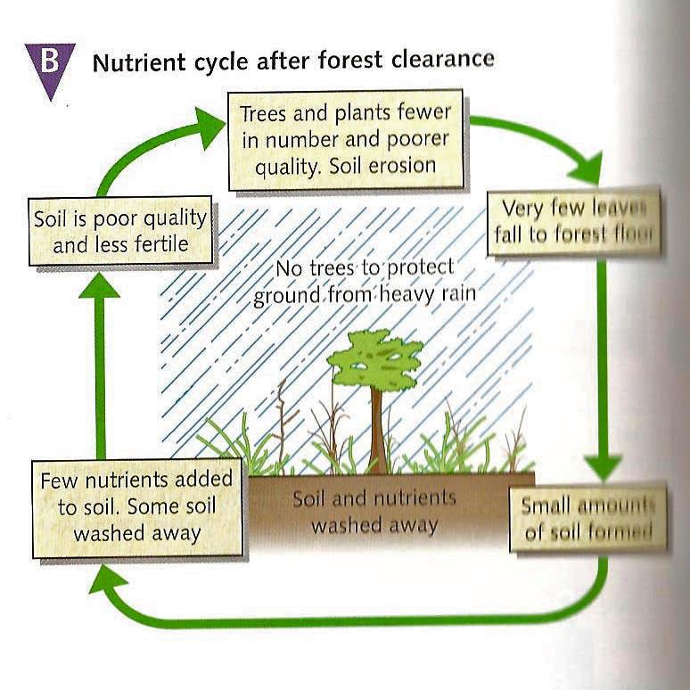 7 Copy the diagrams above into your notes using the heading The Nutrient Cycle.