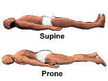 Terminology Origin- the proximal attachment of a muscle or ligament Insertion- the distal attachment of a muscle or ligament Prone- lying face down Supine-