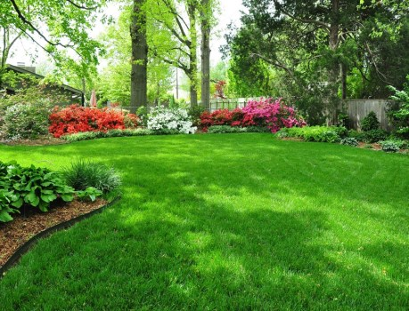 SEPTEMBER WHAT TO DO IN SEPTEMBER Look at Your Lawn!