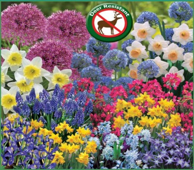 WHAT TO DO IN OCTOBER Plant Spring Blooming Bulbs!