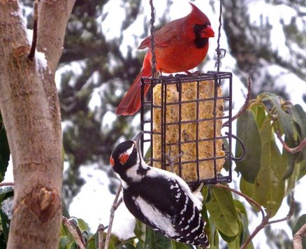NOVEMBER WHAT TO DO IN NOVEMBER Feed the Birds! We attract birds by planting the right kind of trees, shrubs and flowers for forage and protection and place birdhouses in our gardens.
