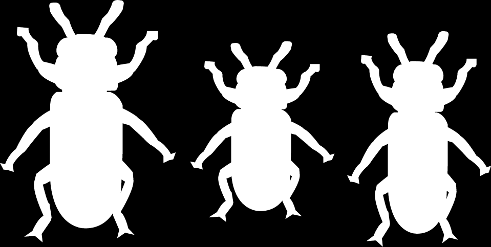 Heredity: Inheritance and Variation of Traits 3 These are all the same kind of beetle. How are the beetles different?