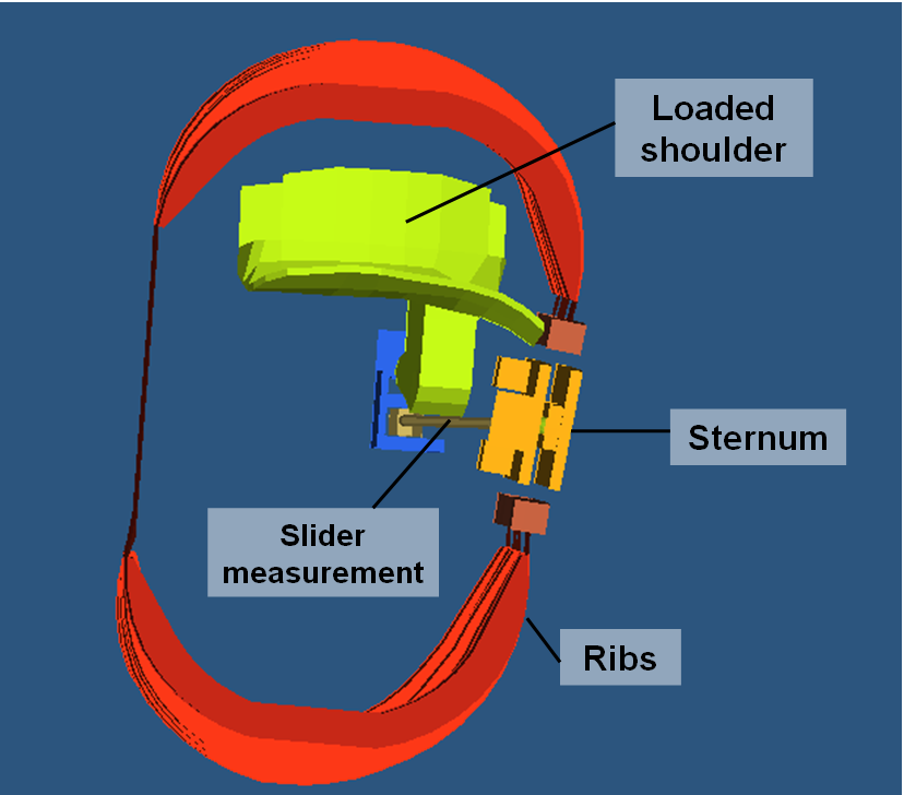 Figure 10. Belt load on the thorax: Mainly the right ribs and the left shoulder are loaded. The unsymmetrical thorax deformation can be measured with the rib eye sensors in sled test, cf. figure 11.