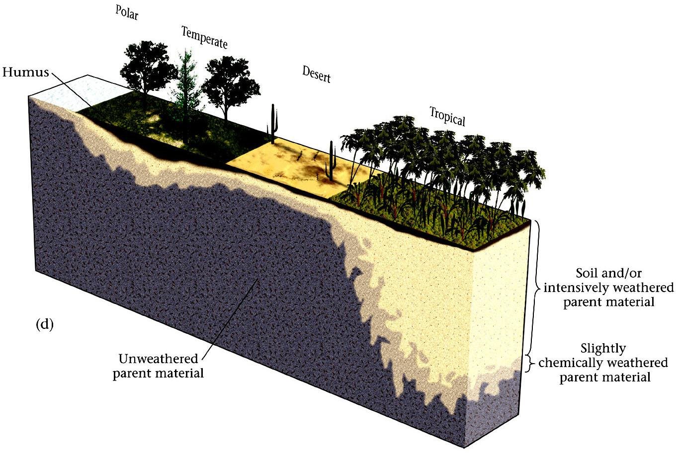 Soil Thickness 4- Climate: Thick soils will form in