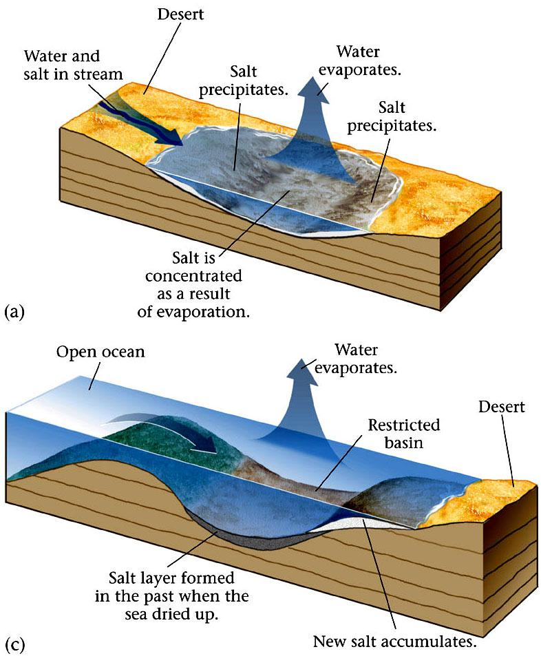 Formation of Evaporites Evaporites can form anywhere where a large