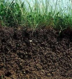 Improvement and stabilization of soil fertility One of the most important compounds of the soil is humus.