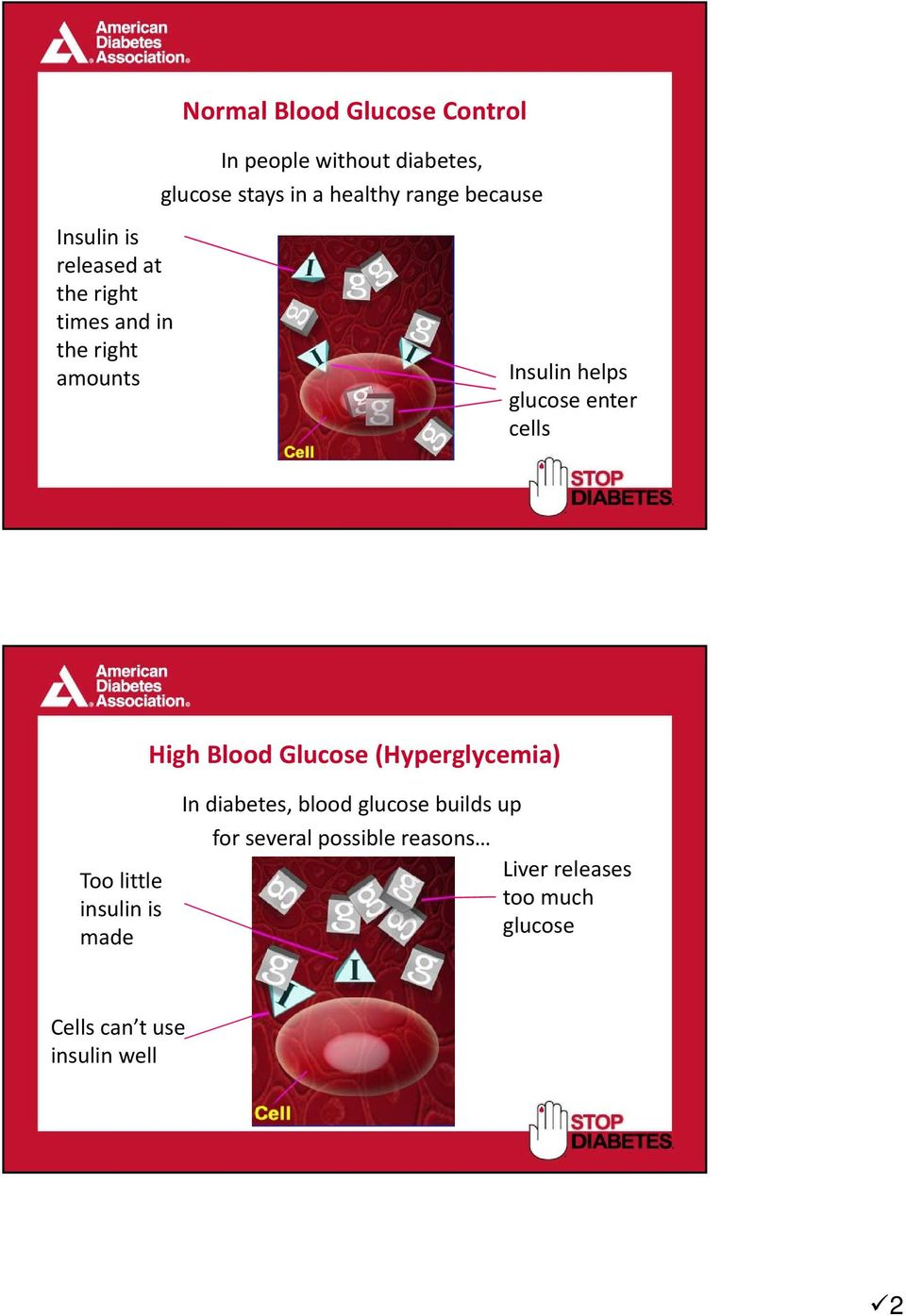 enter cells High Blood Glucose (Hyperglycemia) Too little insulin is made In diabetes, blood