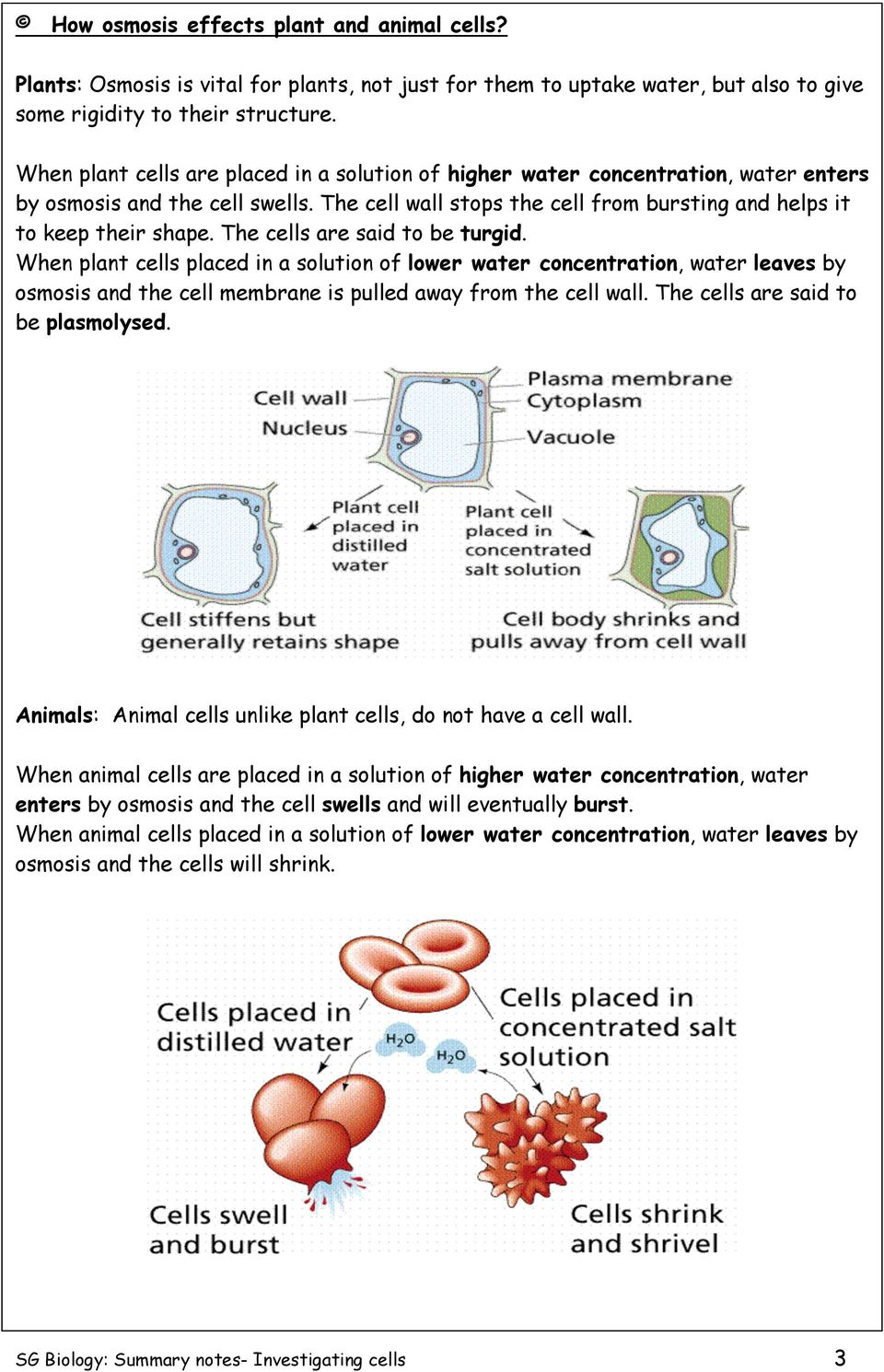 The cells are said to be turgid. When plant cells placed in a solution of lower water concentration, water leaves by osmosis and the cell membrane is pulled away from the cell wall.