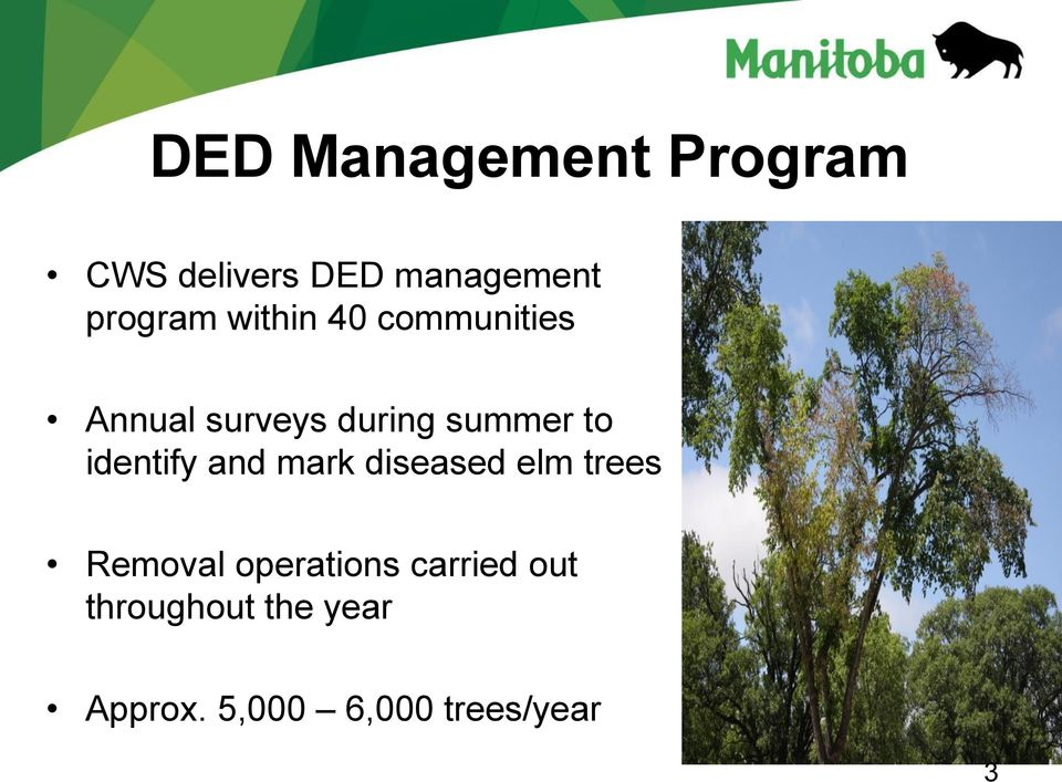 identify and mark diseased elm trees Removal operations