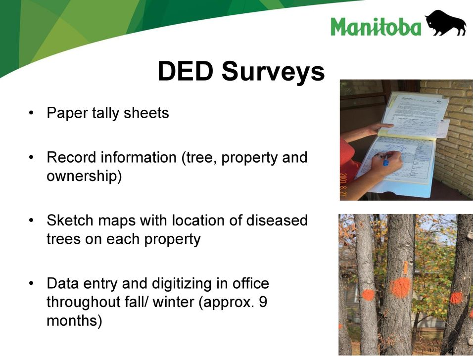 location of diseased trees on each property Data entry