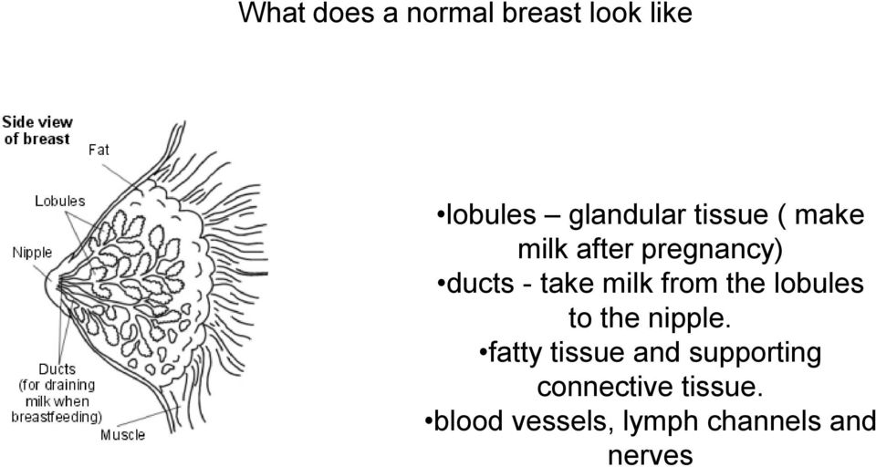 from the lobules to the nipple.