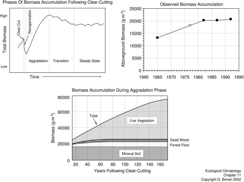 1965 197 1975 198 1985 199 1995 Biomass Accumulation During Aggradation Phase 8 Biomass (g m -2 ) 6 4 2 Total