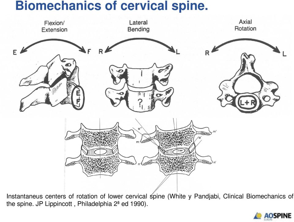 cervical spine (White y Pandjabi, Clinical