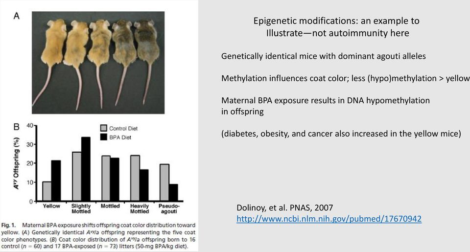 Maternal BPA exposure results in DNA hypomethylation in offspring (diabetes, obesity, and cancer