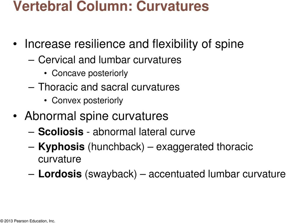 posteriorly Abnormal spine curvatures Scoliosis - abnormal lateral curve Kyphosis