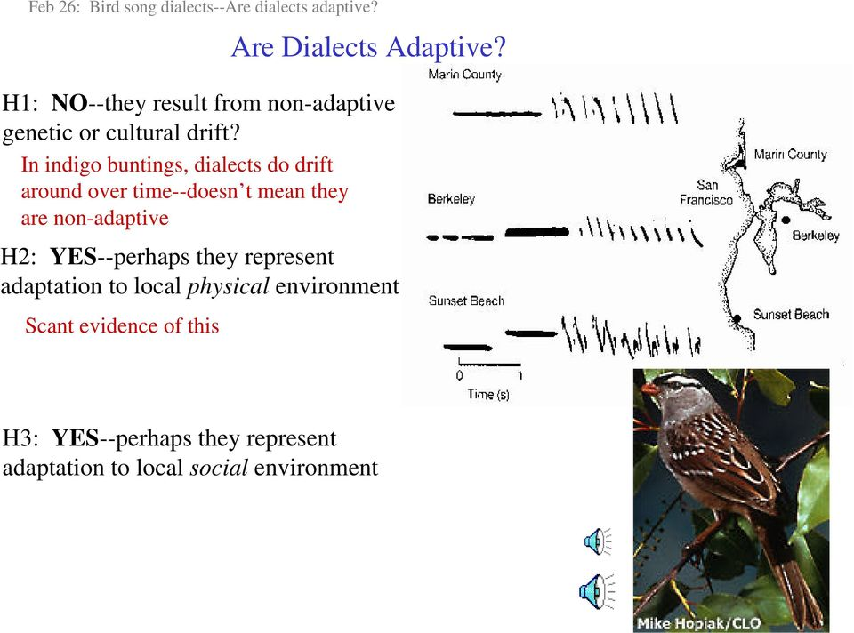 In indigo buntings, dialects do drift around over time--doesn t mean they are non-adaptive H2: