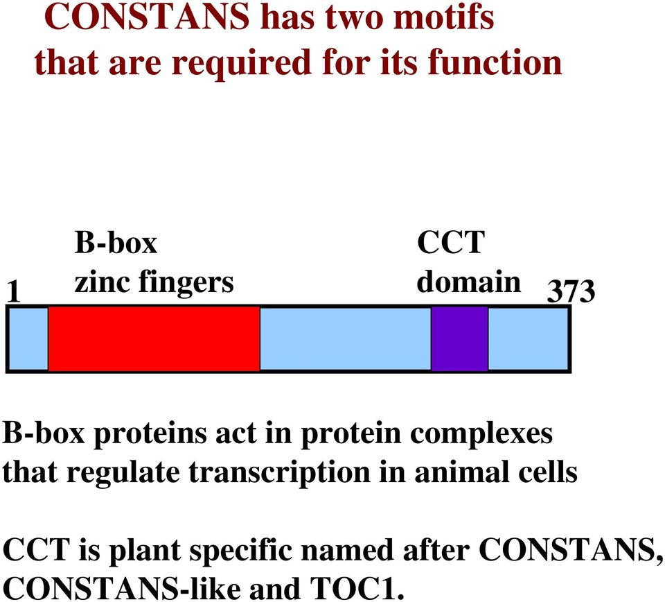 protein complexes that regulate transcription in animal cells