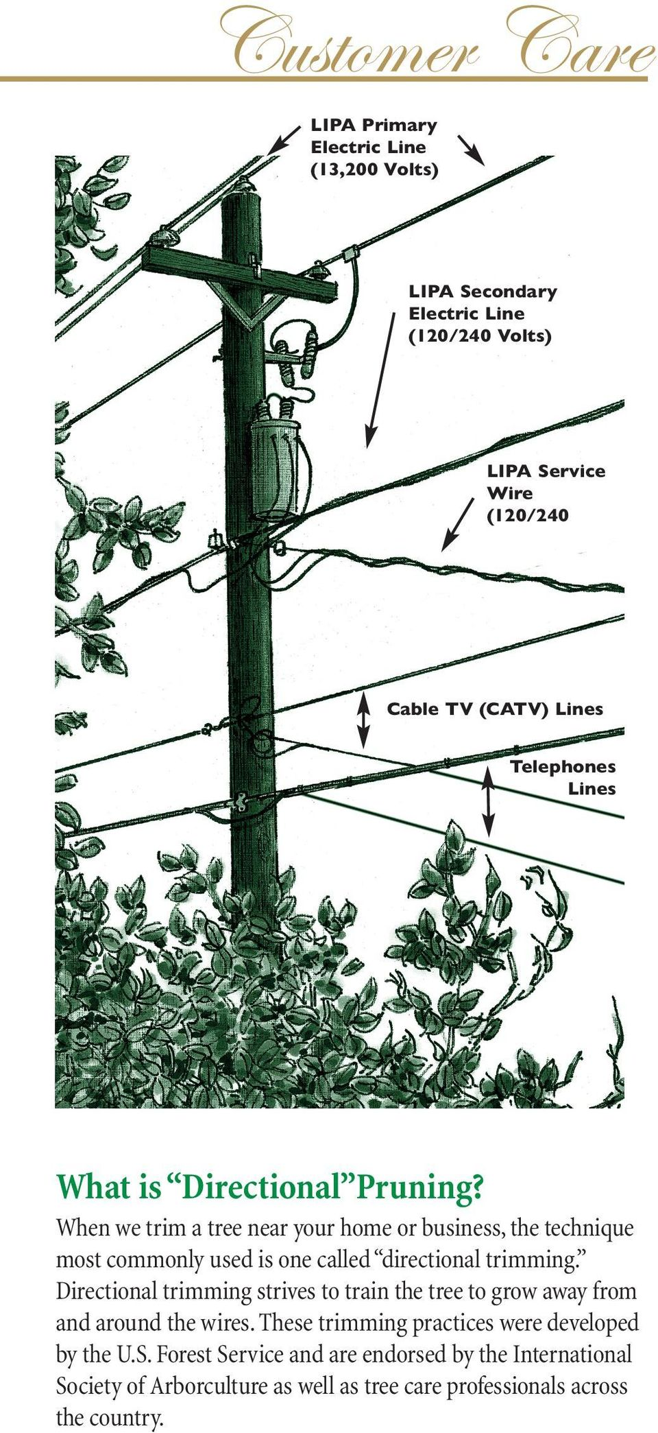 When we trim a tree near your home or business, the technique most commonly used is one called directional trimming.