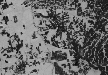 Your NDVI images should look like: 1990 2011 Lighter (brighter) shades indicate a higher NDVI value and therefore more green vegetation. The dark areas are un-forested. 3.