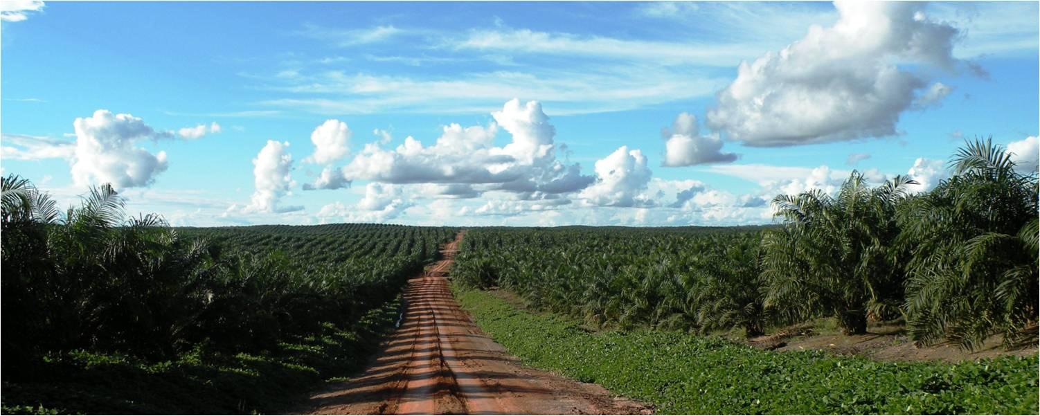 Oil palm in Indonesia linked to trade and investment: Implications for