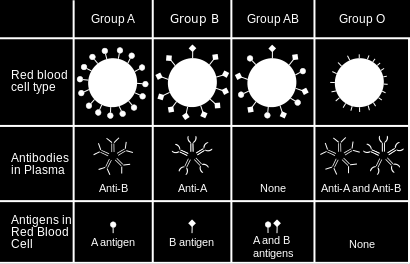 codes for the type of antigen found in the membrane of red blood cells AOB blood gene is a codominant